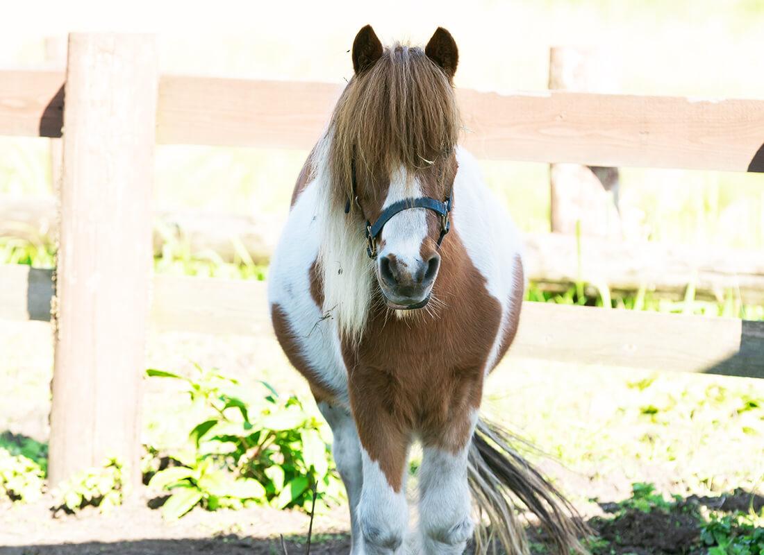 ウェスタン・ポニー乗馬